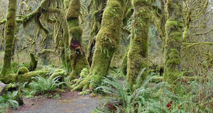 Symbiosis Olympic National Park
